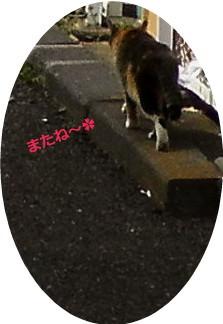 花ブ20150323-5