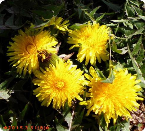 花ブ20150401-2