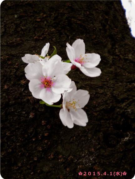 花ブ20150402-2