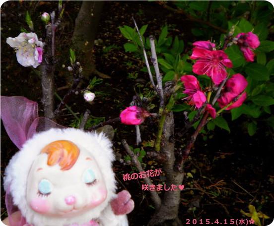 花ブ20150416-6