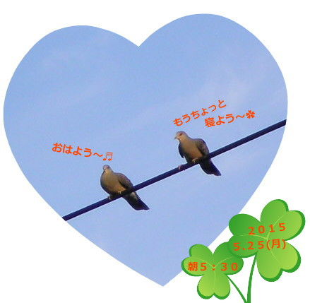 花ブ20150525-1