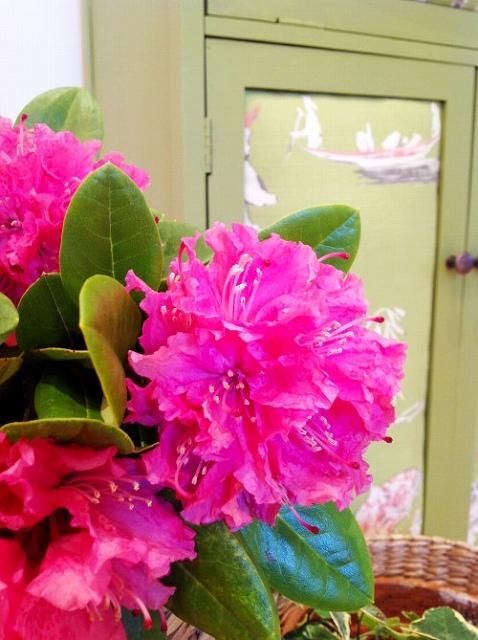 Chinoiserie-And-Flower-mydearirene-e1430605962638.jpg