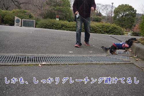 DSC04851.jpg