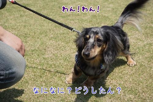 DSC08166.jpg