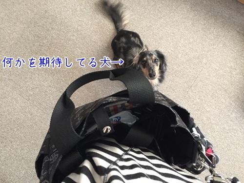 IMG_6321.jpg