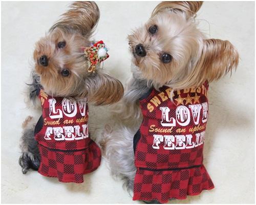 3パンツ赤服クルココ