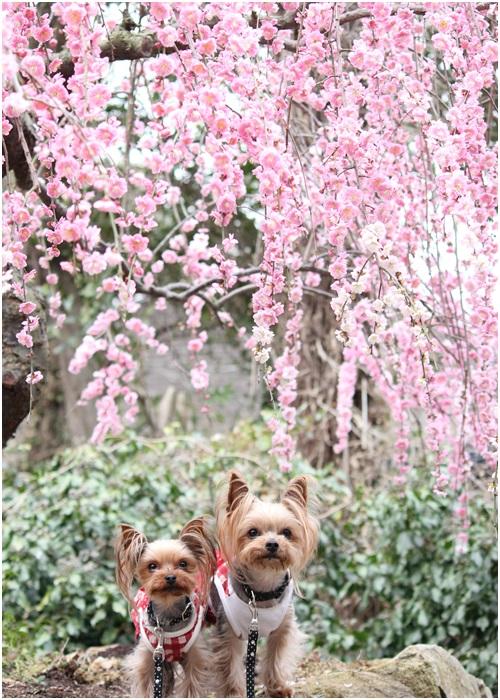 4犬フォト梅とクルココ