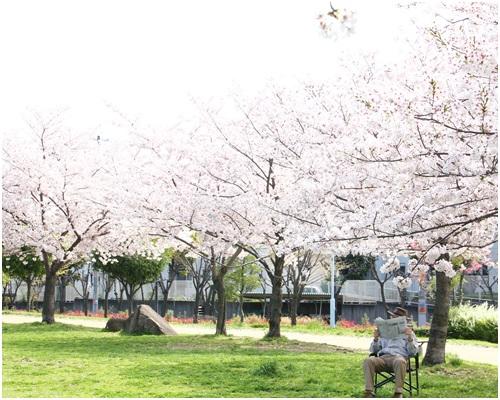 桜とおじさん