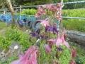 仁伏ターシャおばあさんの庭その2