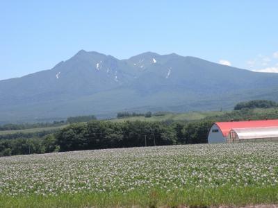 斜里岳とジャガイモの花
