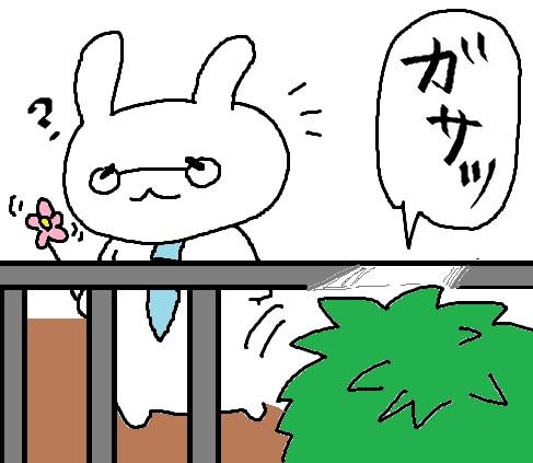 春うさぎ2