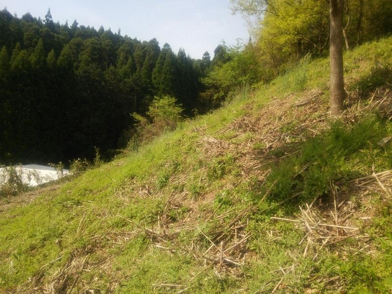 草刈150424-1