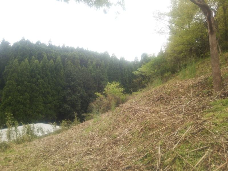 草刈150424-3