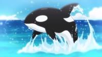 gop16-orca01.jpg