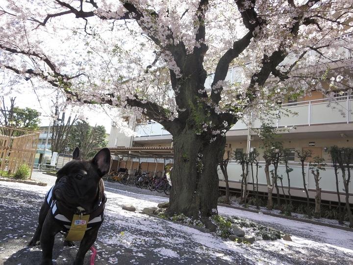 15桜団地①