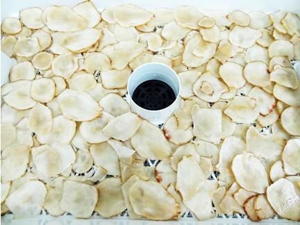 スライス菊芋を乾燥トレイに並べる