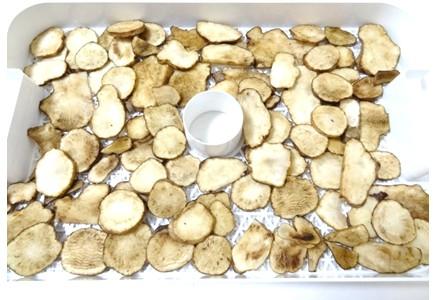 食品乾燥機で菊芋の乾燥