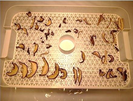 椎茸乾燥機で12時間乾燥後