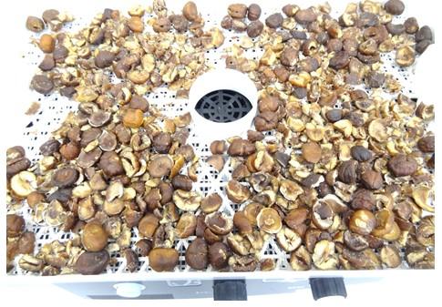 食品乾燥機で乾燥させた栗