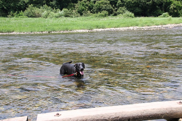 川へ飛び込む