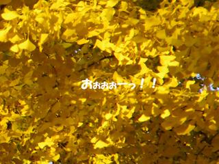 20141123011.jpg