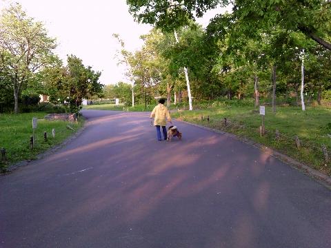 愛犬と散歩するご婦人