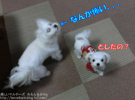 20150309_10.jpg
