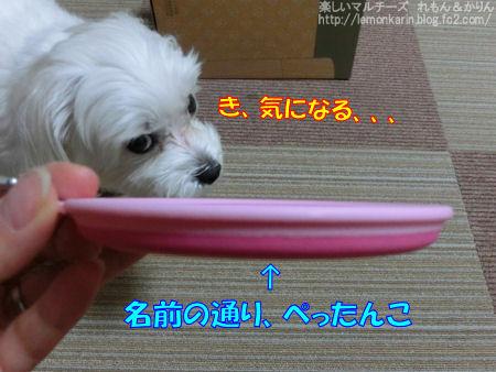 20150325_4.jpg
