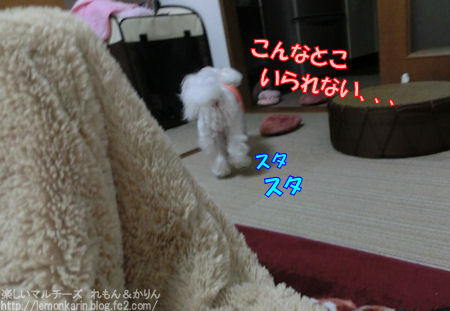 20150421_9.jpg