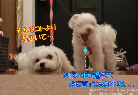 20150424_3.jpg
