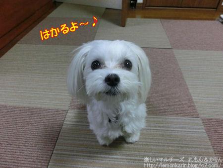 20150509_1.jpg