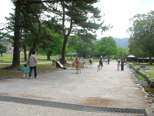 201506201043奈良公園3