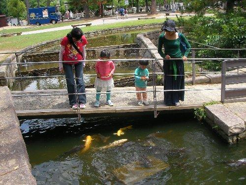 201506201101奈良公園4