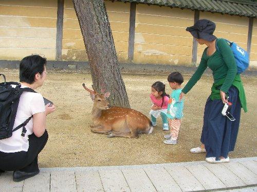 201506201029奈良公園1