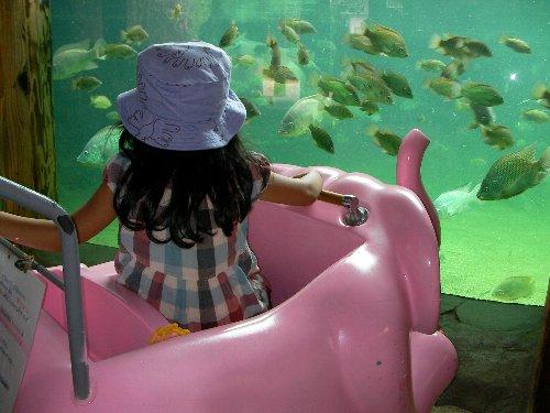 20150623天王寺動物公園の一日⑥-1