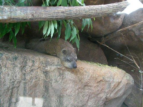 201506231051天王寺動物園⑩