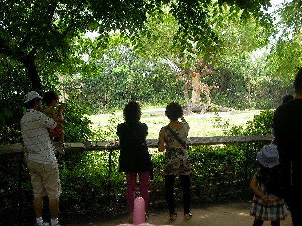 201506231051天王寺動物園⑦