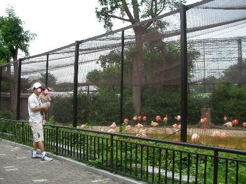 201506231051天王寺動物園③-1