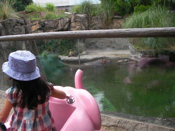 201506231051天王寺動物園⑥