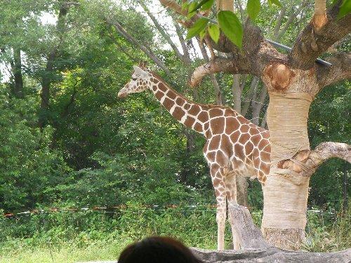201506231051天王寺動物園⑨
