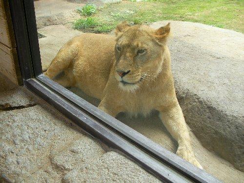 201506231133天王寺動物園⑬