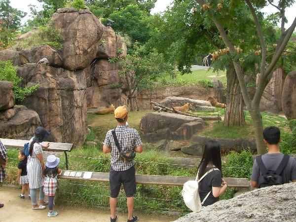201506231133天王寺動物園⑧