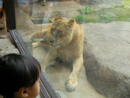 201506231133天王寺動物園⑪-1