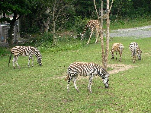 201506231051天王寺動物園⑬