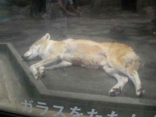 201506231154天王寺動物園⑤