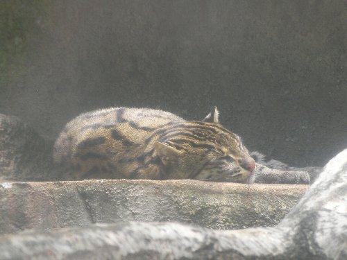 201506231154天王寺動物園②