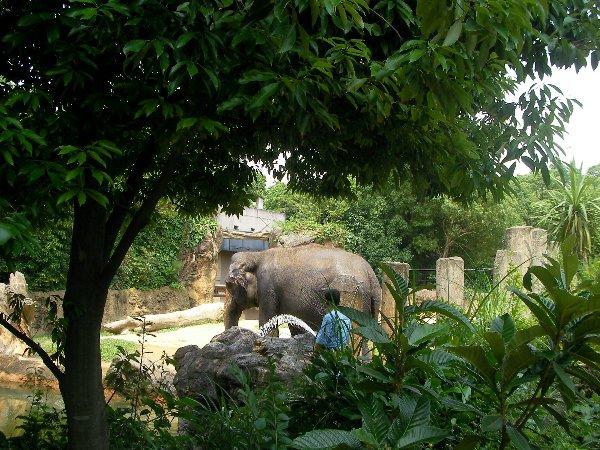 201506231154天王寺動物園⑪