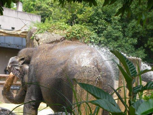 201506231154天王寺動物園⑫