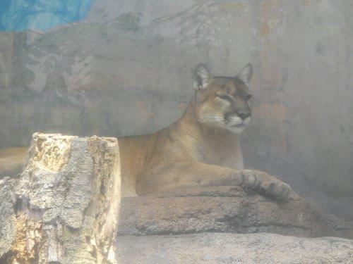 201506231146天王寺動物園⑯