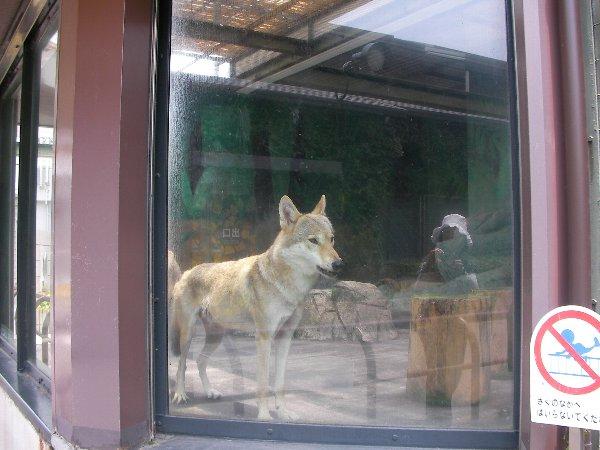 201506231154天王寺動物園④